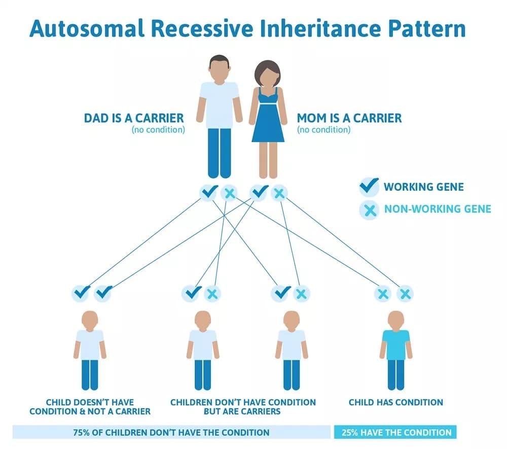 Auto Recessive Inheritance Pattern